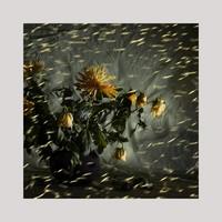 frauke-staerk-ausbildung-fotografin-studium-fotografie-09